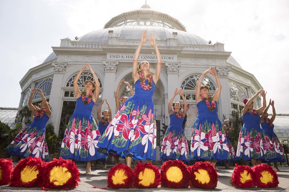 Hula Dancers perform in The Bronx