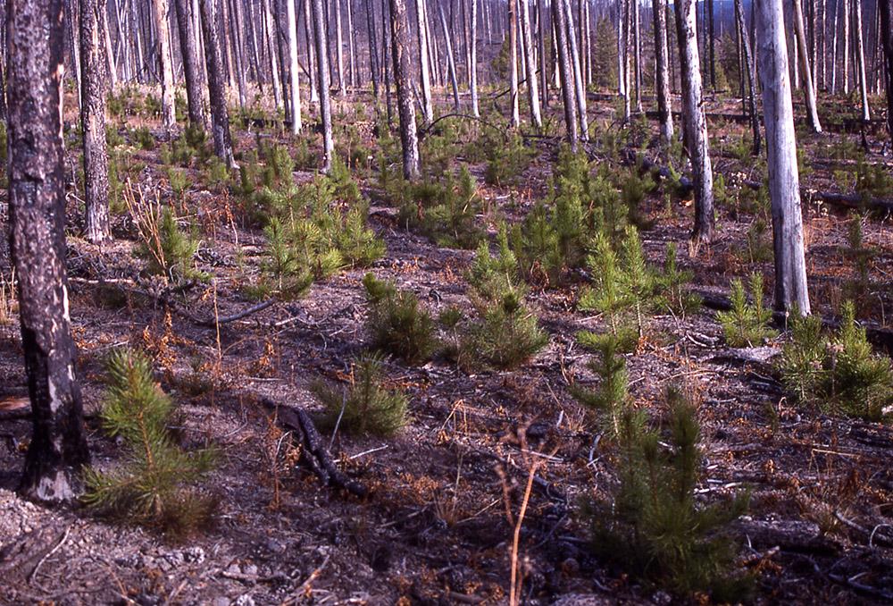 Seedlings Fire page.jpg