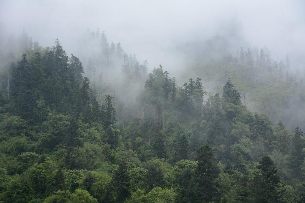 Forest fog.jpg