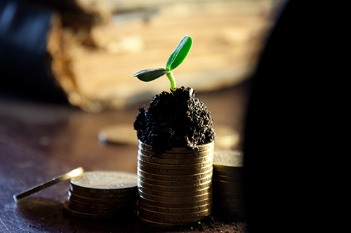 plant growing on coins - small.jpg