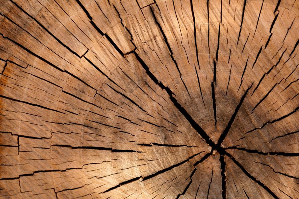 close up of wood stump.JPG