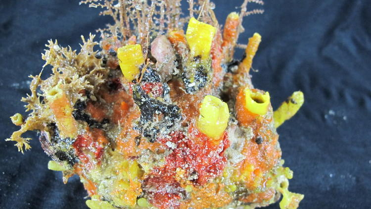 la-sci-sn-coral-reef-amazon-river-20160422-001.jpg