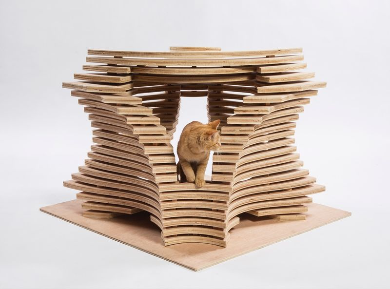cat10.0.jpg