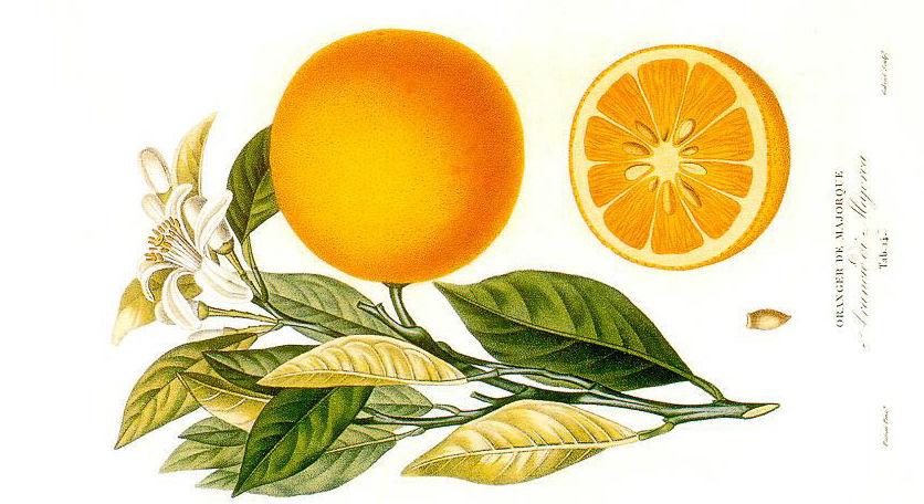 Histoire_et_culture_des_orangers_A._Risso_et_A._Poiteau._-_Paris_Henri_Plon_Editeur_18723.jpg
