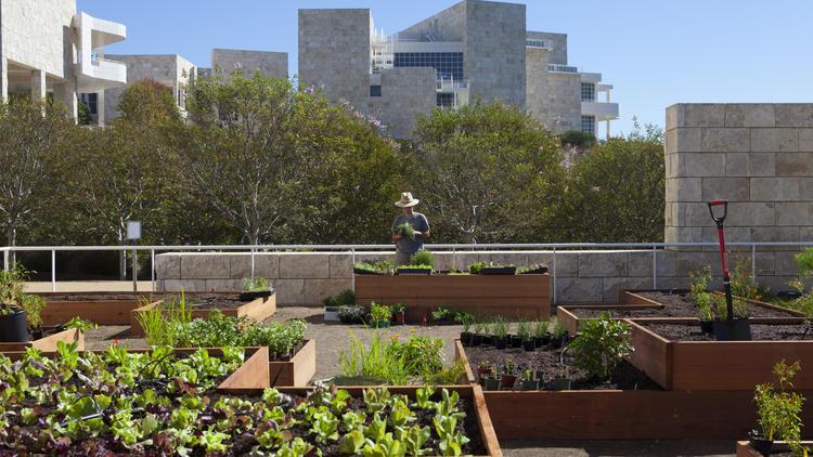 la-et-cam-salad-grows-at-getty-julia-sherman-2-001.jpg