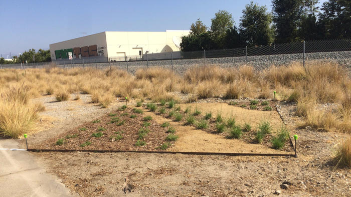 Mel Chin has offered his design to the public, so that others around Los Angeles can plant the same garden in their yards. (Carolina A. Miranda / Los Angeles Times)