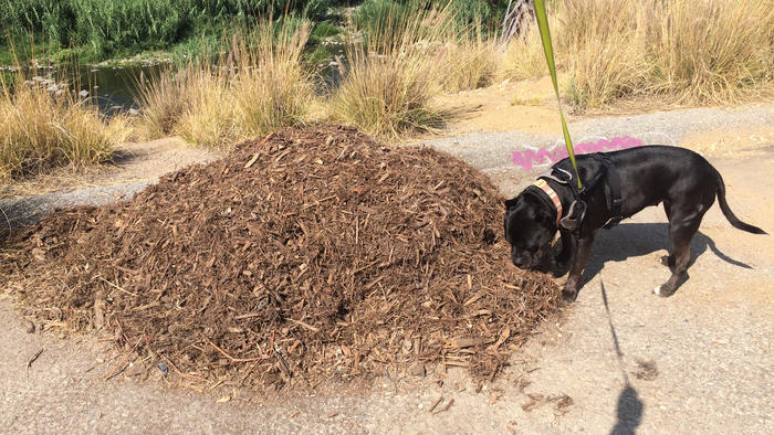While Bonnie was intrigued by the piece, she much preferred the sculptural and aromatic qualities of this nearby pile of mulch. (Carolina A. Miranda / Los Angeles Times)