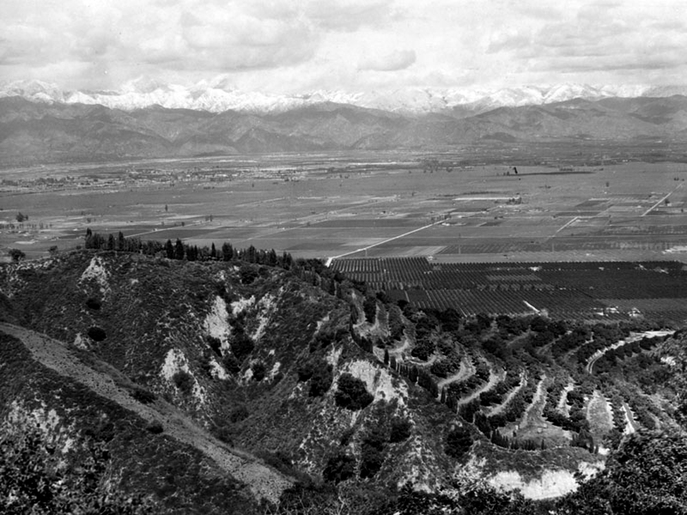 The orange groves seen in this panoramic view of the San Gabriel Valley in 1930 were replaced by urban development by 1960, impacting the recharge of the aquifer under the Central Basin. Photo courtesy of the Security Pacific National Bank Collection – Los Angeles Public Library.