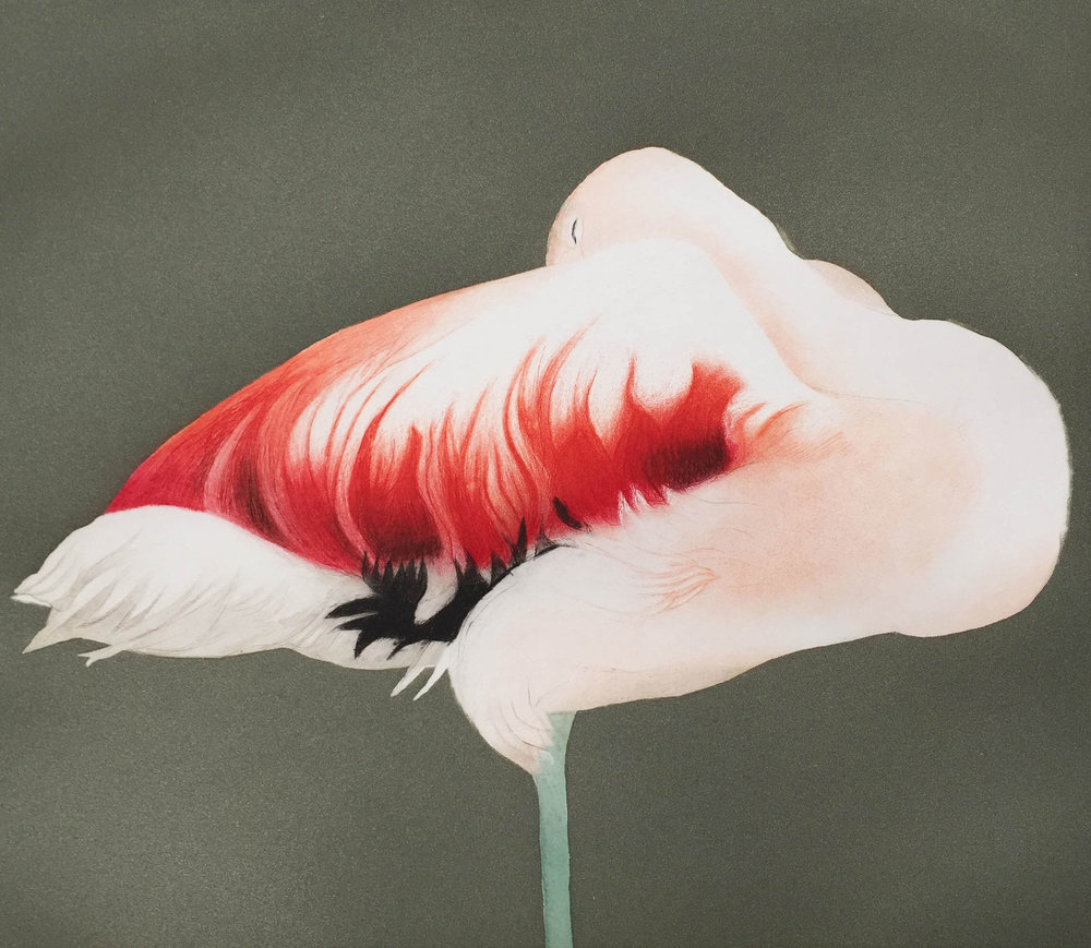Flamingo Sleeping