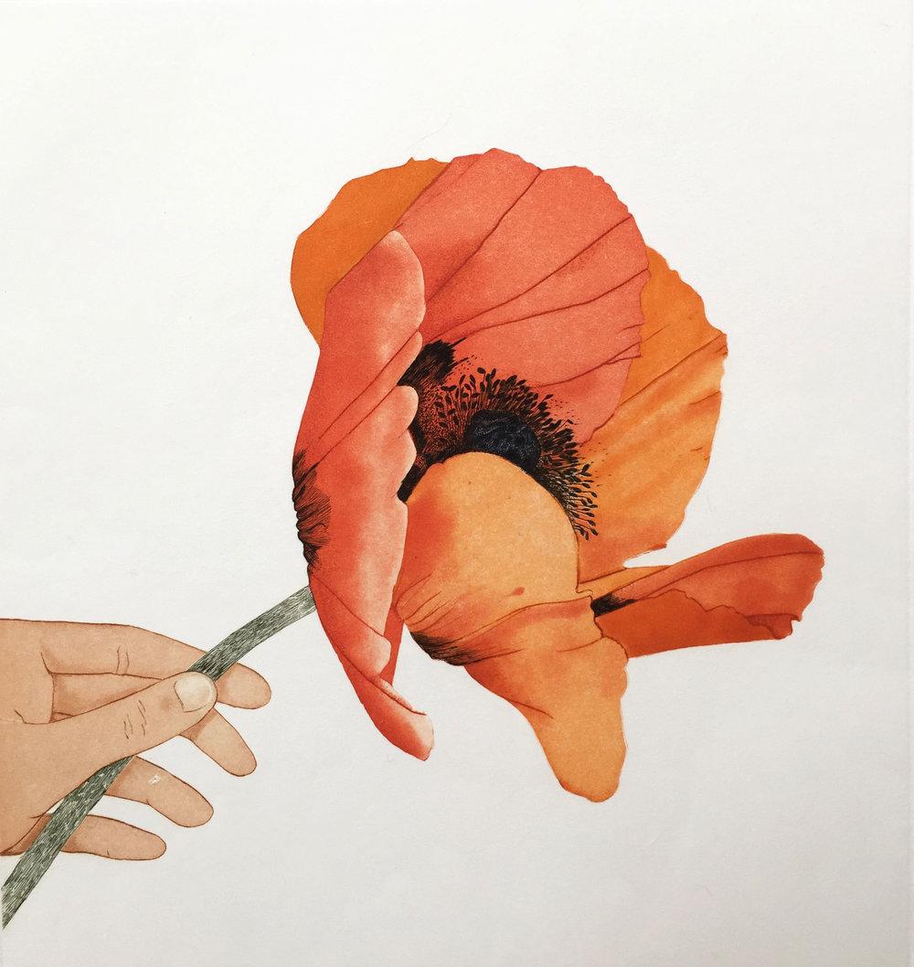 Poppy in Hand