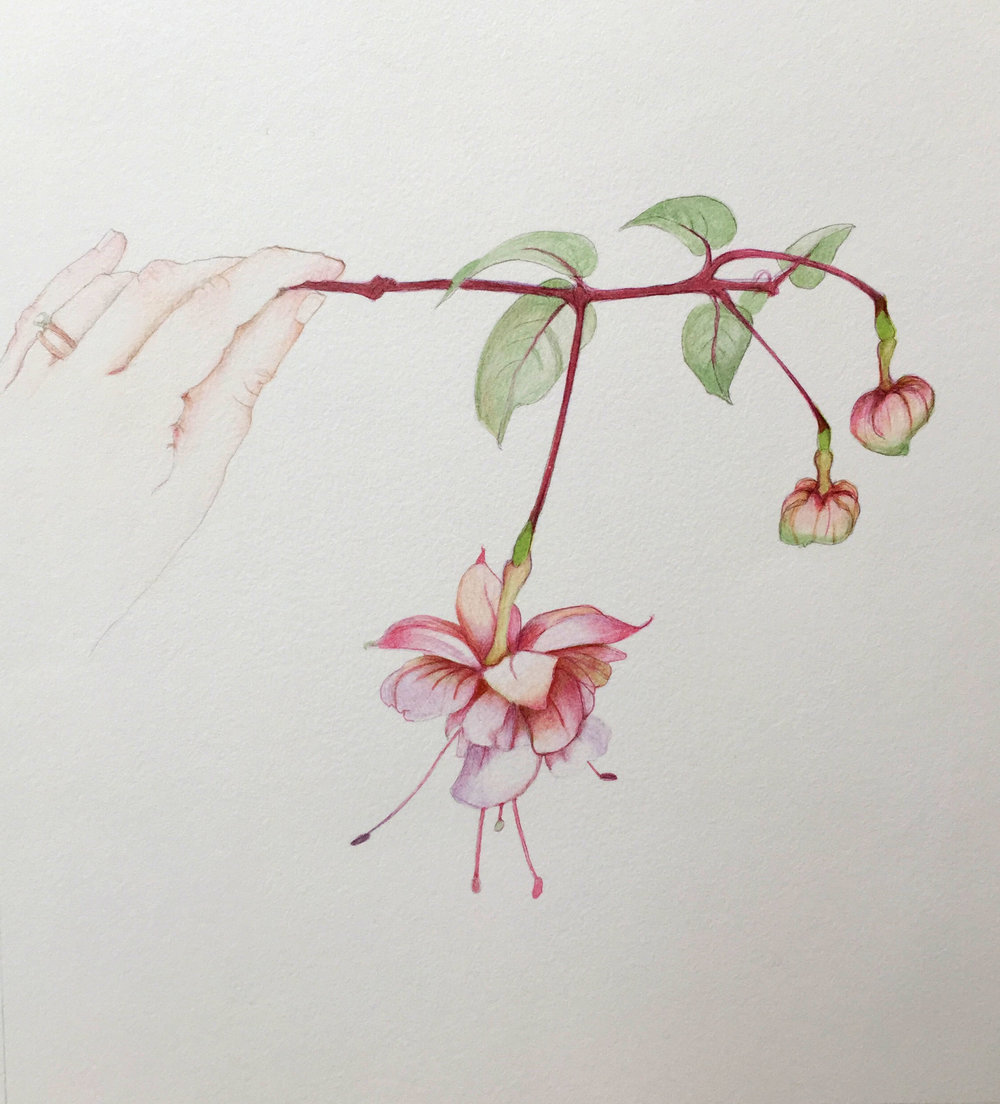 Fuchsia in Hand