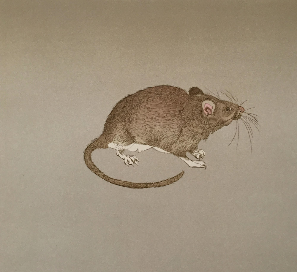 Olivia Brown Rat