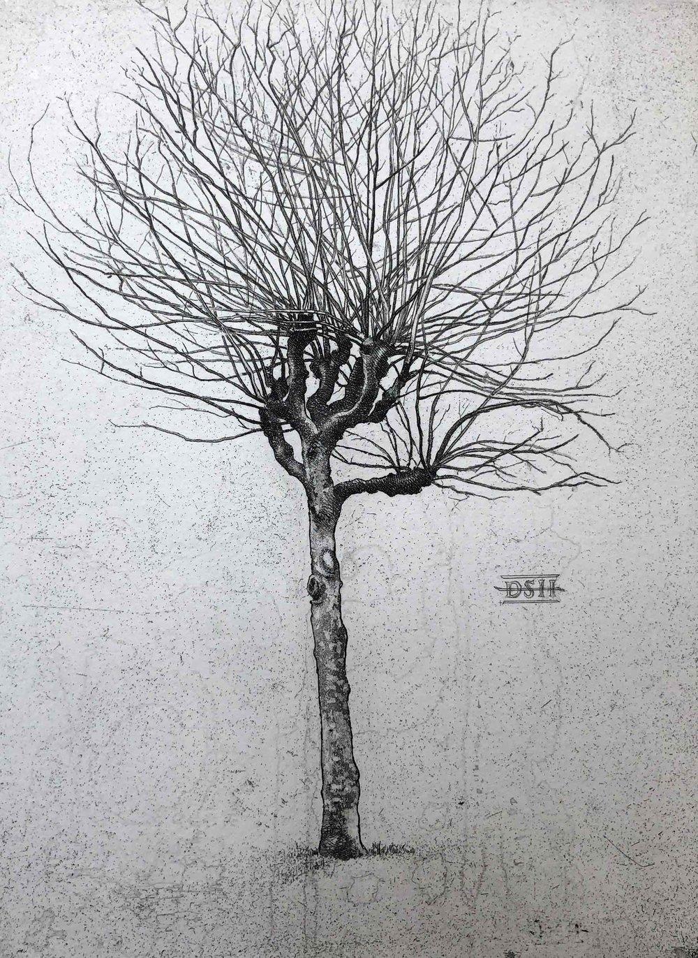 Plain Tree A