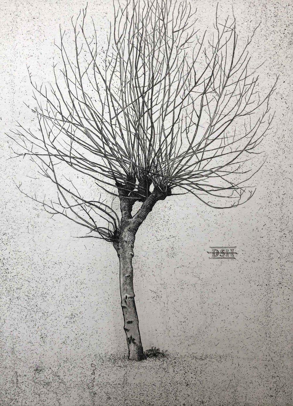 Plain Tree B