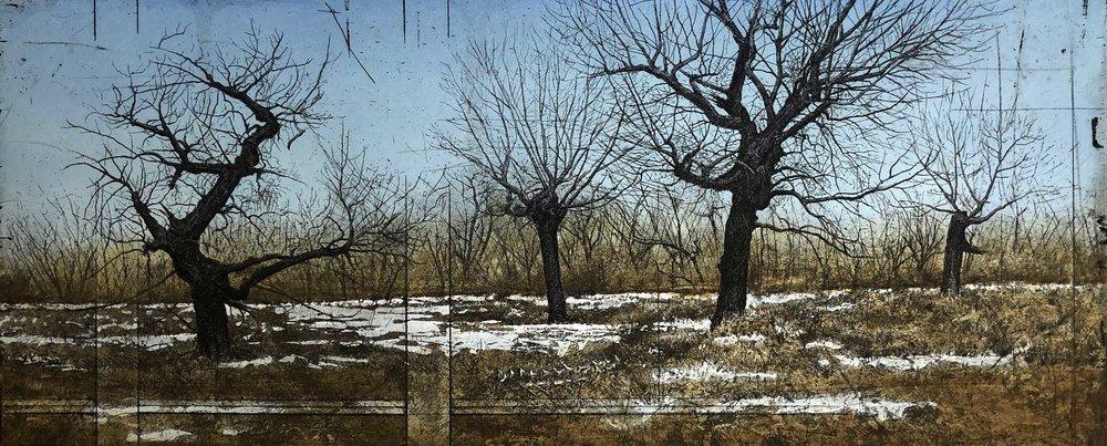 Cottonwoods II