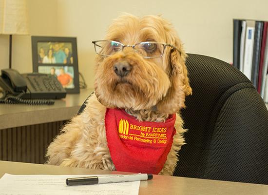 Ziggy Deragon   Canine Greeting Specialist