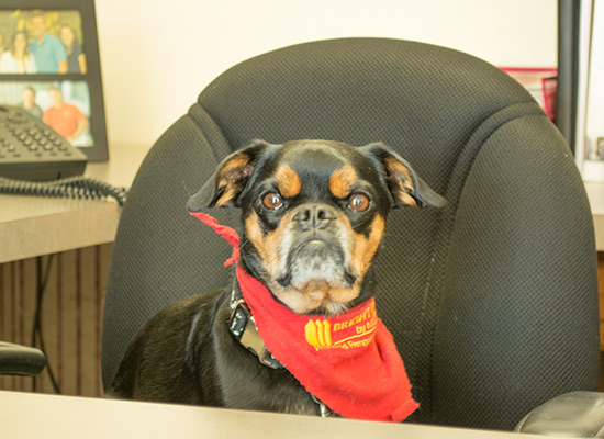 Rocky Knapp Canine Office Assistant