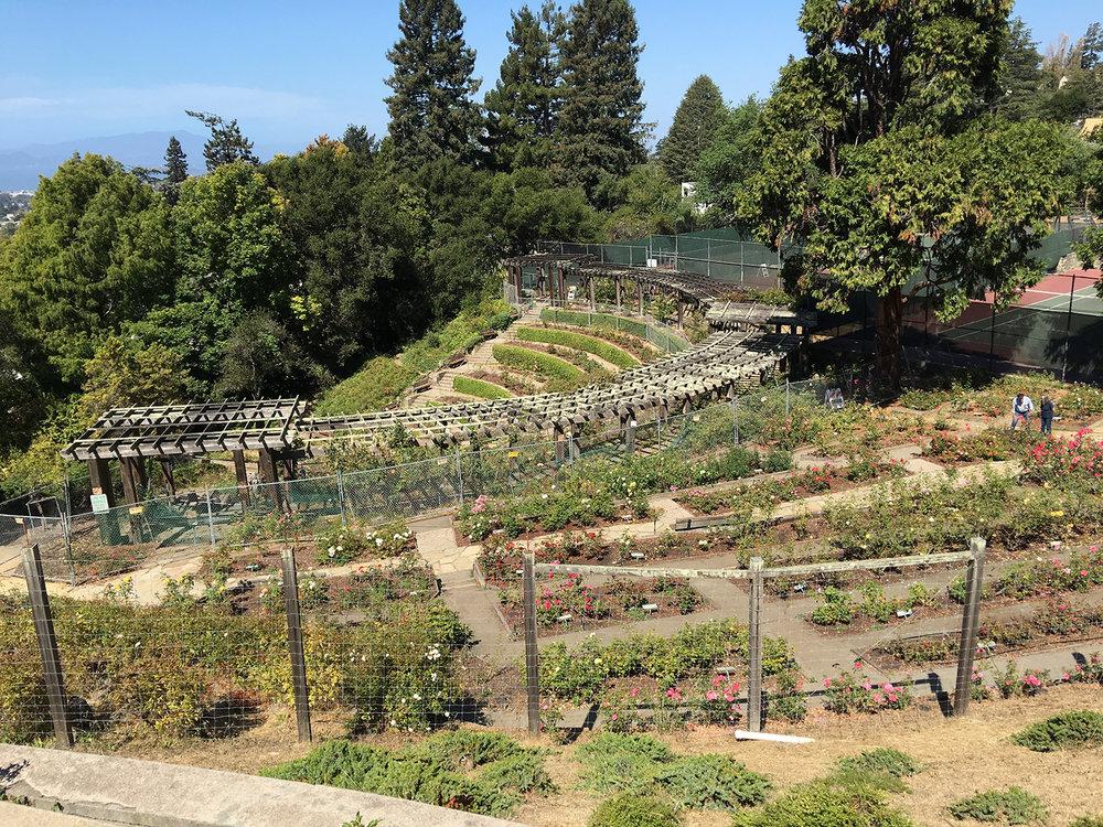 Berkeley Rose Garden Berkeley Garden Club