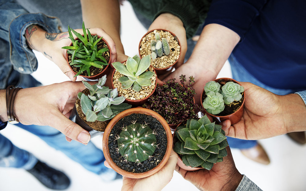 plant_sale_blog.jpg