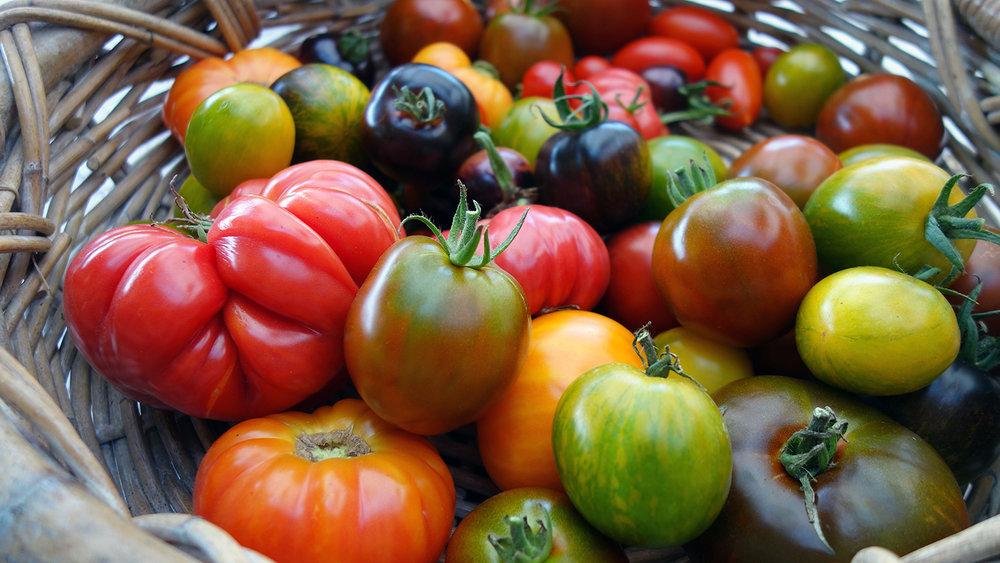 tomato_9_18.jpg