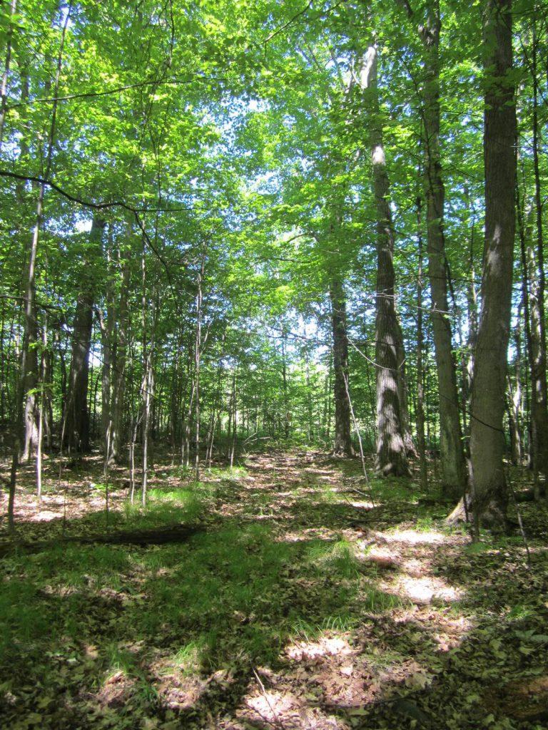 boyd trail.jpg