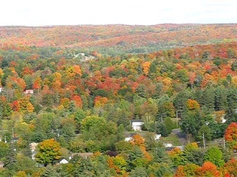 fall haliburton.jpg