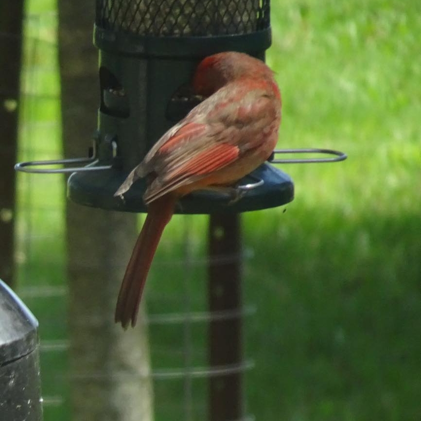 april scott bird1.jpg