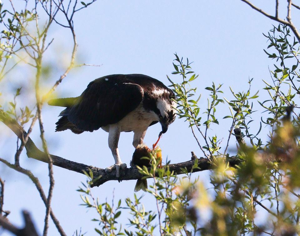 steve jacobs bird10.jpg