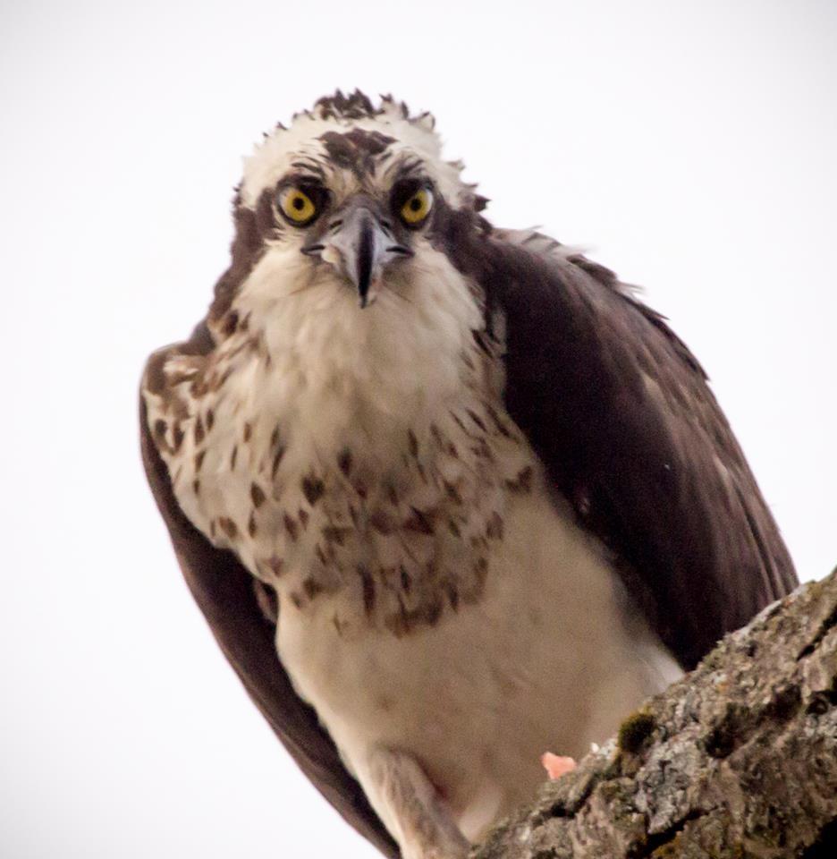 barbara craven bird4.jpg