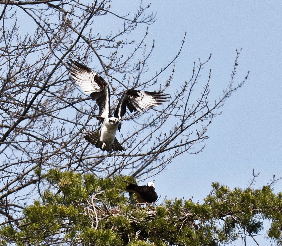 steve jacobs bird 12.jpg