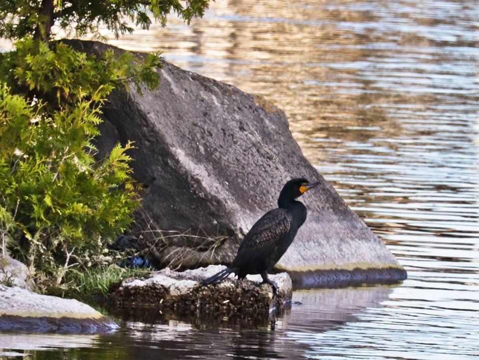 steve jacobs bird 13.jpg