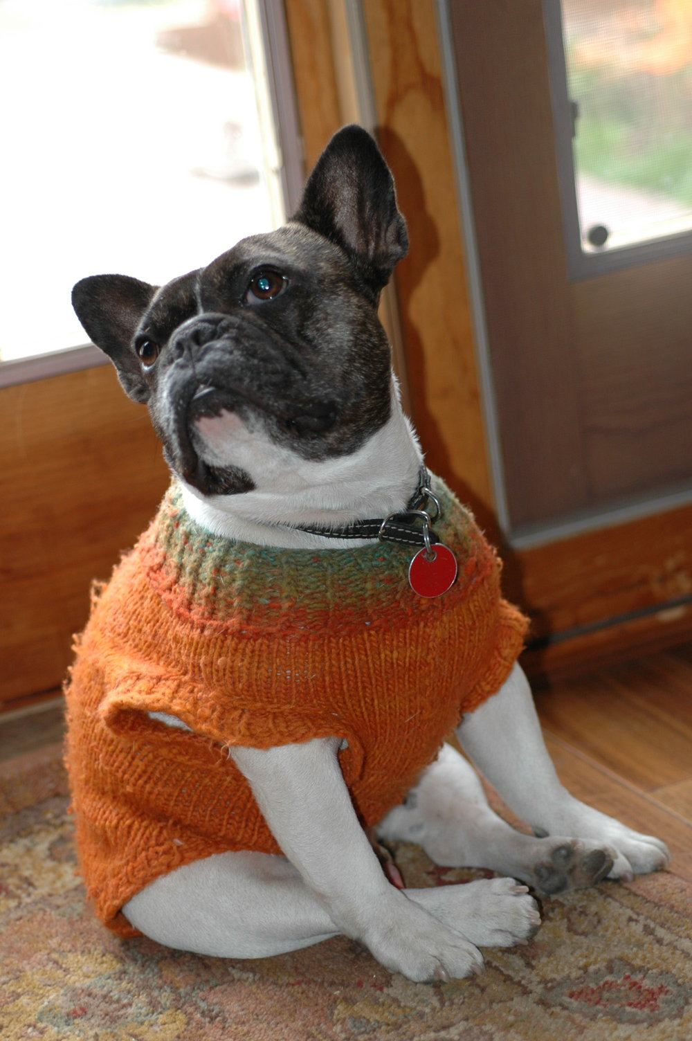 It got a little cold where we live so we would knit him sweaters!