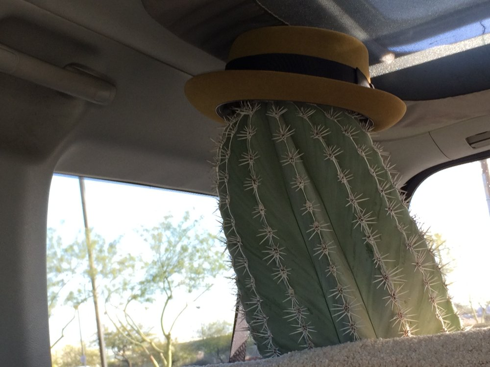 Our new friend a Cardon Cactus