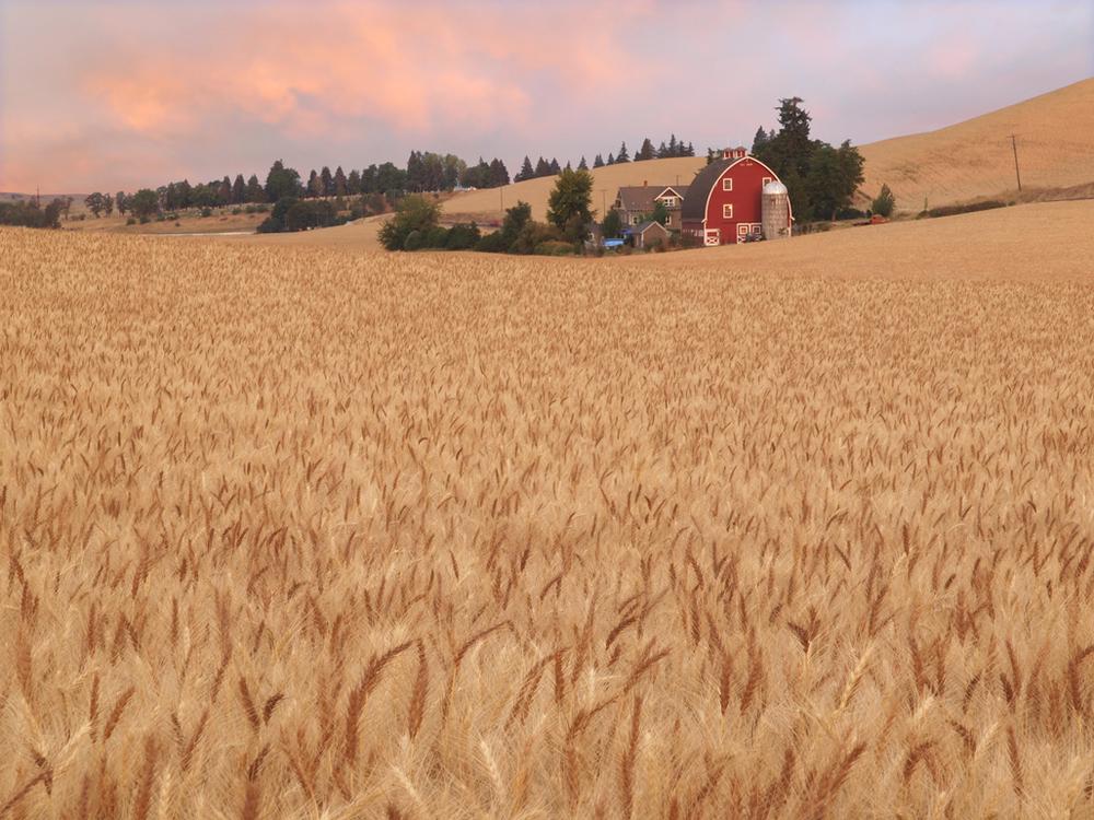 old farm2.jpg