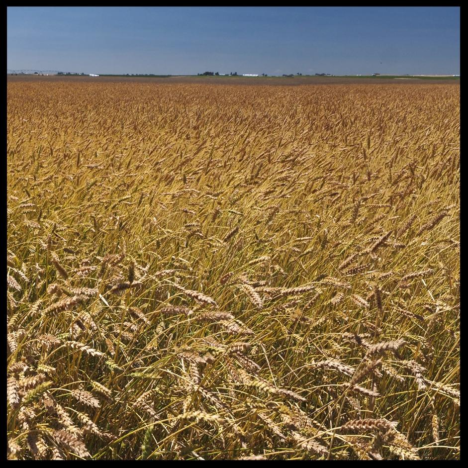 grains5.jpg