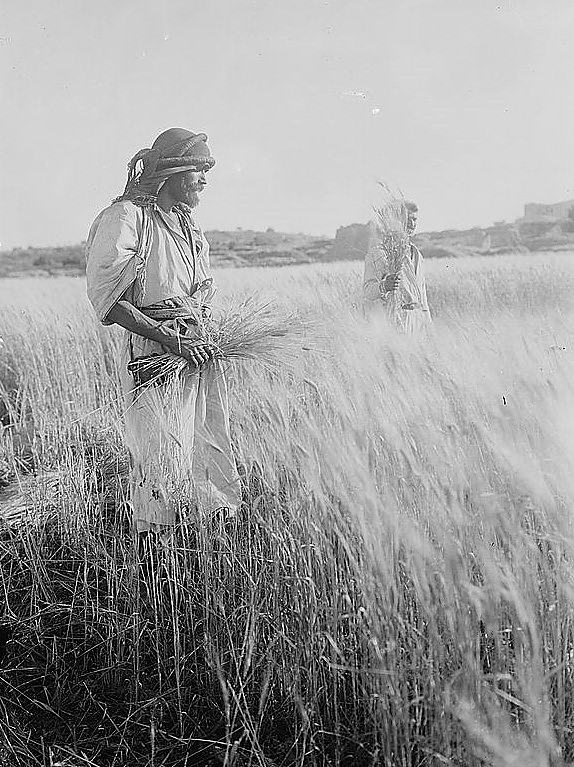 Attributed to G. Eric Matson,  In the Field of Boaz near Bethlehem  (c. 1930);   Glass negative, 5 x 7 inches;   G. Eric and Edith Matson Photograph Collection, Prints and Photographs Division, Library of Congress