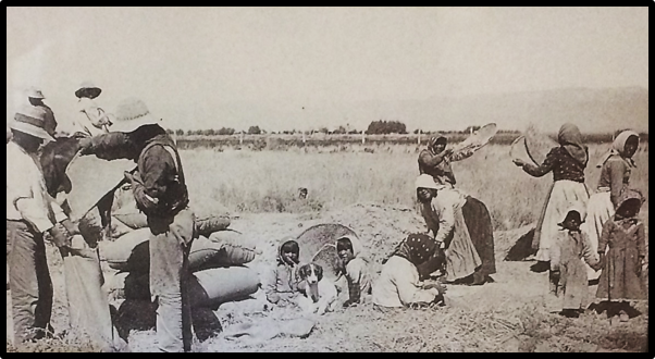 Mission San Gabriel Harvesters (c. 1895)