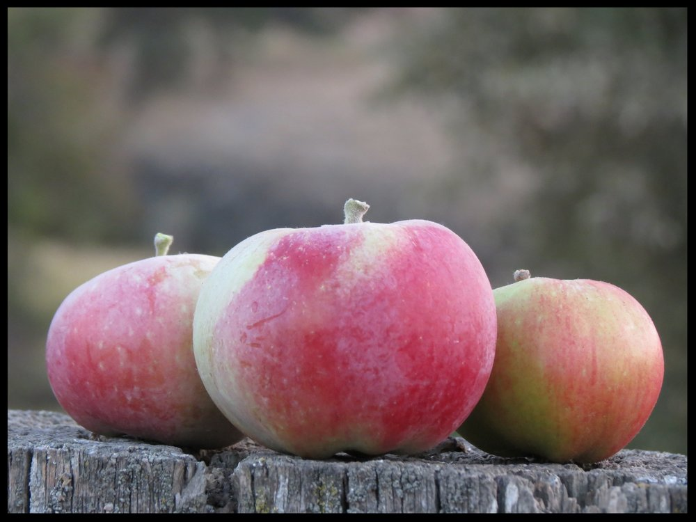 Apples from the Delong Orchard