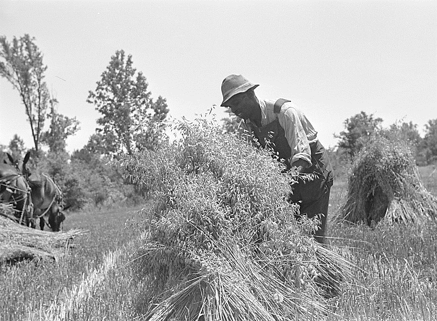 Marion Post Wolcott,  Harvesting Oats on Flint River Farm, Georgia  (1939);   Black and white film nitrate negative, 35 mm;   Farm Security Administration Collection, Prints and Photographs Division, Library of Congress