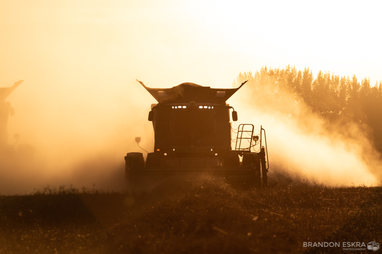 mineview_harvest_2018-272.jpg
