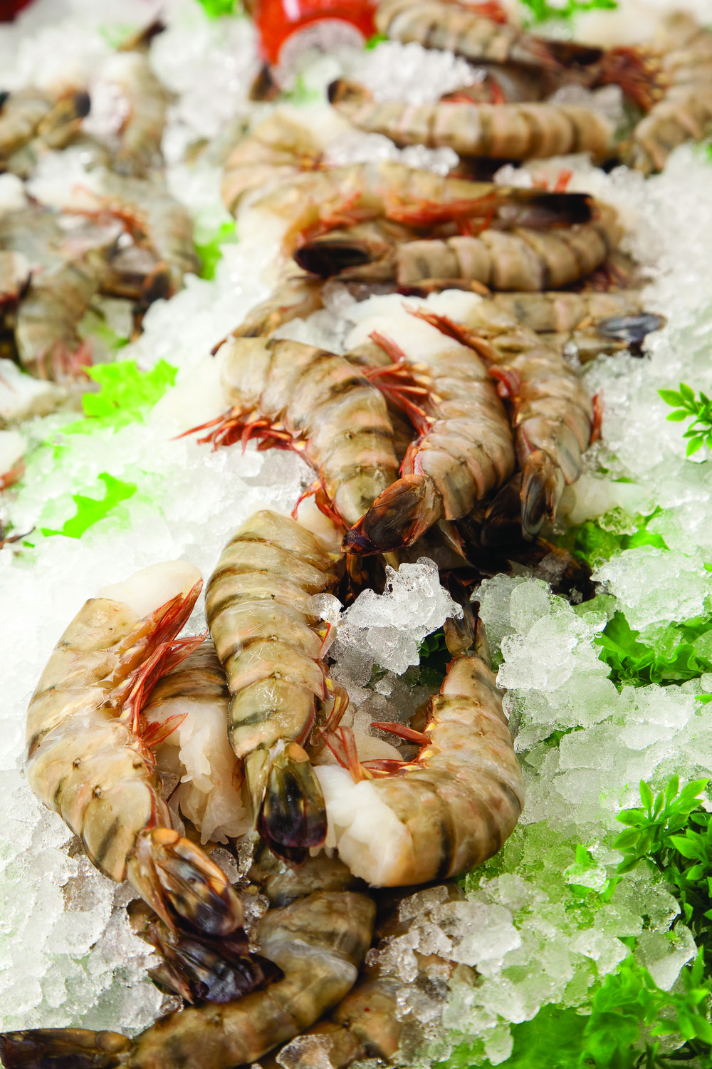 SUCCULENT BLACK TIGER PRAWNS