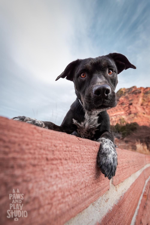 San-Francisco-Dog-Photographer-Cattle-Dog-Mix.jpg