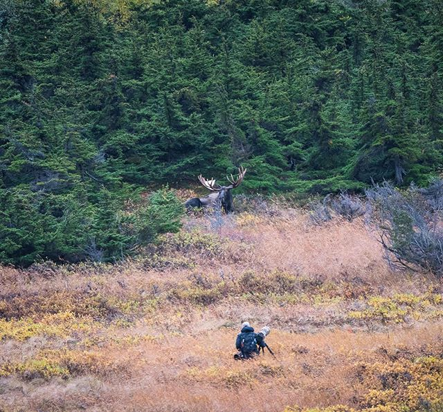 Moose & behind the scenes photographing Alaskan Bull Moose: want to see behind the scenes on how I post process my photos in Lightroom & Photoshop for free? Just click the link in my bio to download the detailed guide instantly * * * * * * * * * * #lr_earth #thisisgoalzero #restbetterplaybetter #thruthepaces #ps_storybook #USFWS #celebratewild #gettheshot #nanpapix #eye_for_earth  #wildgeography #ir_animals #world_bestanimal #Mycanonstory #africanwildlife #bd_pro #oph #BBCEARTH #basspro #animalfanatics #animal_sultans  #splendid_animals #exclusive_wildlife #animalelite #pocket_allnature #ip_connect #nature #nature_brilliance