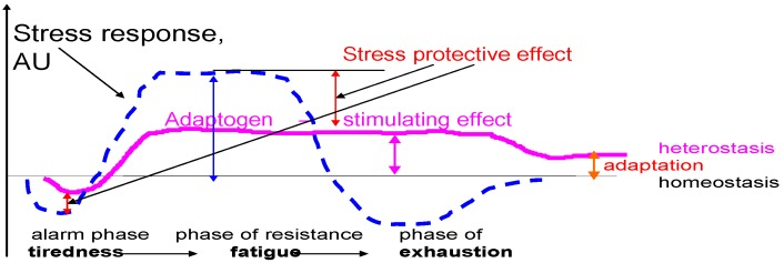 Adaptogens increase the state of non-specific resistance in stress and decrease sensitivity to stressors, which results instress protection, and prolong the phase of resistance (stimulatory effect). Instead of exhaustion, a higher level of equilibrium (the homeostasis) is attained the heterostasis. The higher it is, the better the adaptation to stress. Thus, the stimulating and anti-fatigue effect of adaptogens has been documented in both in animals and in humans. .