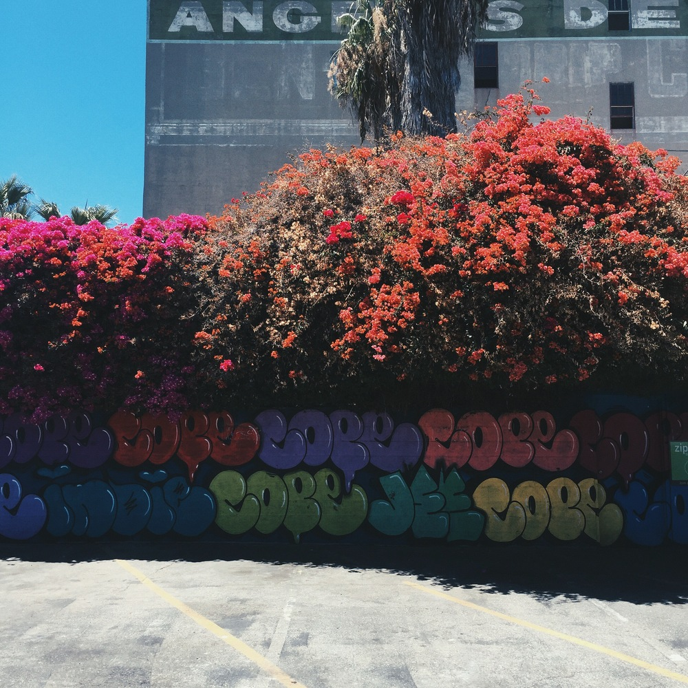 Around every corner are these crazy bougainvilleas!