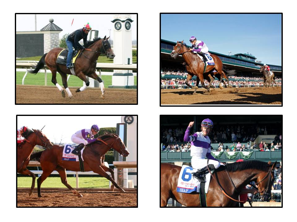Irap, the first maiden winner of the Bluegrass Stakes, will start next in the Kentucky Derby. (Photos courtesy: Keeneland).