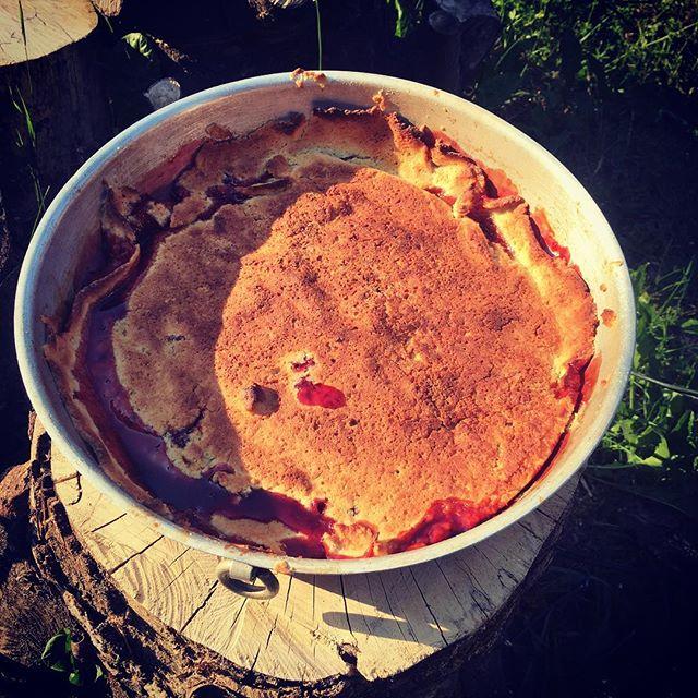 Plommontartetartin m. plommon från trädgården! #semester #tarte