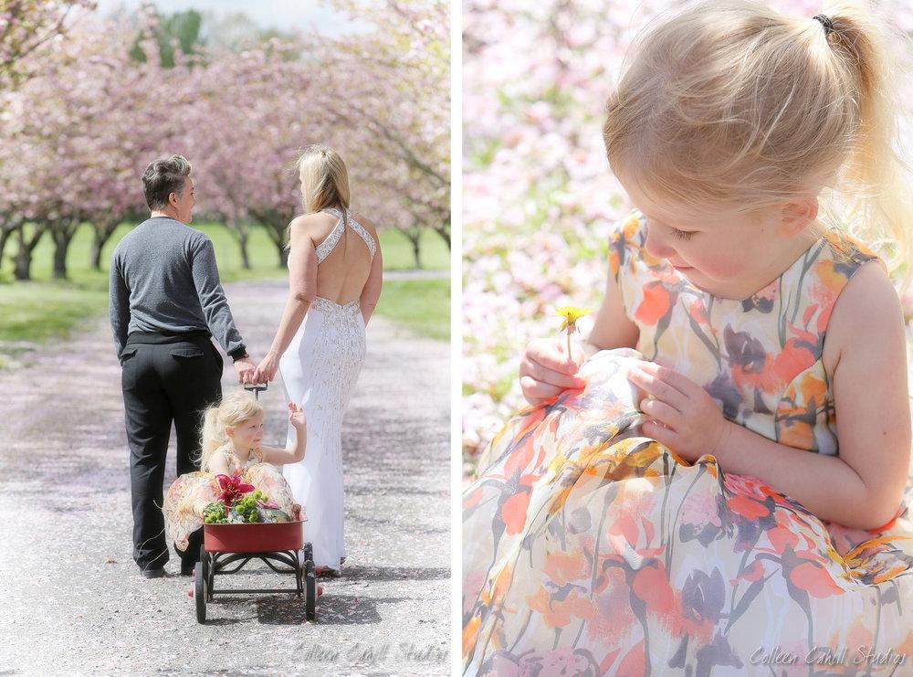 cherry_blossom_FB0001.JPG