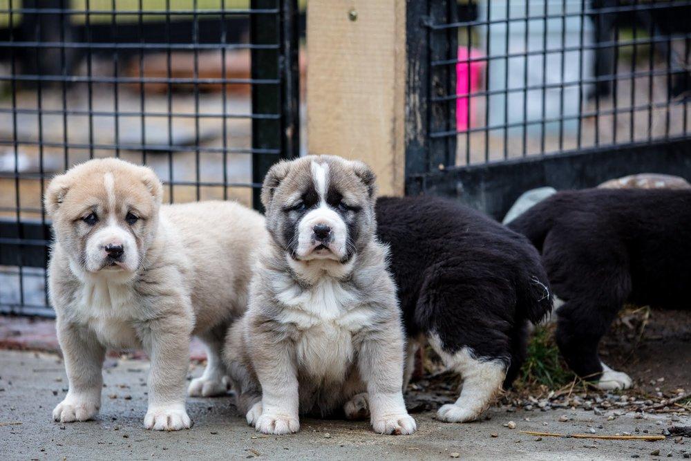 puppies-1754.jpg