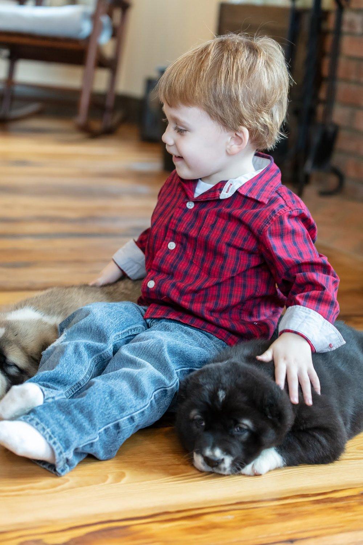 puppies-2159.jpg